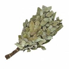 Эвкалиптовый веник (серебристый)